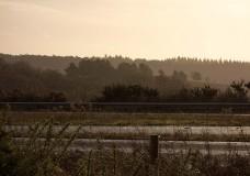 In Search of a Vista – Recce at Bolderwood Walk